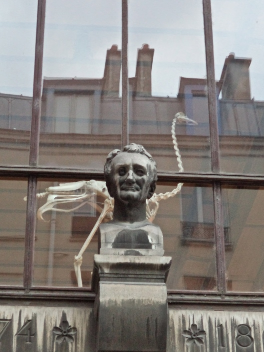 André Marie Constant Dumécil, zoologist, looks down from the wall of the Museum of Comparative Anatomy and Zoology.  He seems pleased with how everything is going during the Rentrée.
