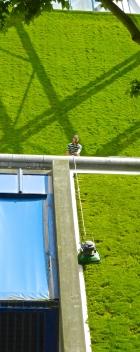 Tending grass walls of Bercy stadium with a pendulum-shaped mower